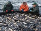Study: Aquaculture along coastal shores could meet global seafood demand