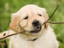 Collar tracks dog's activity, emotional state