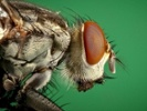 Can't swat that fly? This might be why