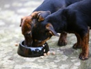 Supply chain disruptions hit pet food makers