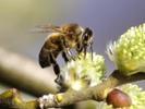 General Mills plants pollinator paradises