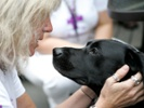 Comparative oncology may lead to cures for people and their dogs