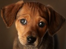 Wunderman goes OOH to find homes for rescue pets