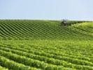 Champagne region fights mildew fungus after heavy rains