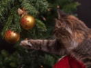 Holiday plants, foods, decor are hazardous to pets
