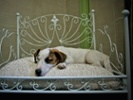New IHG promo aims to fetch pet lovers