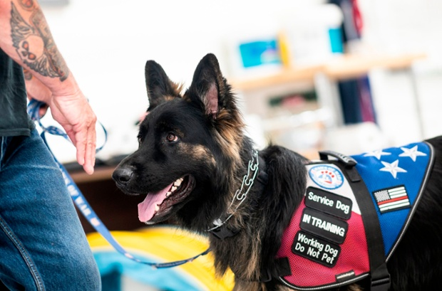 Nonprofit teams veterans with support dogs