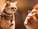What feline hyperthyroidism means for human health.