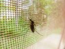 BioNTech to develop malaria vaccine using mRNA tech