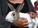 Nev. veterinarians brace for RHDV2