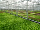 Indoor farms win fans as demand grows for local produce