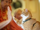 Cat owners experience many health benefits