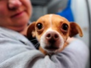 Pet ownership tips for beginners.