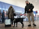 Dog teams help speed up TSA checkpoint lines