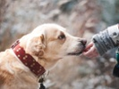 Fat, reproductive organs good sources of stem cells for canine therapies