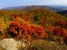 The science behind autumn colors