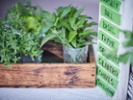 How to work with fresh herbs