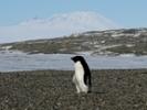 Antarctic research hub needs renovations