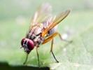Tiny fruit fly brain yields big insights