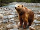 科学家在人类的皮肤上发现了北极熊的基因,而它的肌肉和细胞平衡