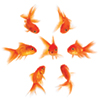 Feeling like a fish out of water in your hospital boardroom?