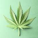 Nov. 3 CLE: IP Strategies, Enforcement Considerations, and Potential Pitfalls in the Cannabis Industry
